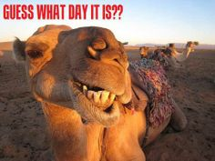 hump day | Almost gone, but hump day it was.