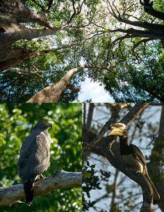 Birds in Yala National Park, Sri Lanka