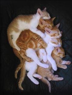 Breaking news! This just in: there's a 5 kitty pile up on the 405 freeway due to nap time. Workers are looking to clear the kitties from the road but they're just so darn cute sleeping!