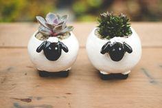 Suculentas em vazinhos de cerâmica http://melinasouza.com/2015/09/04/d-i-y-como-plantar-suculentas/ Melina Souza - Serendipity <3 #Suculentas #plantas #DIY