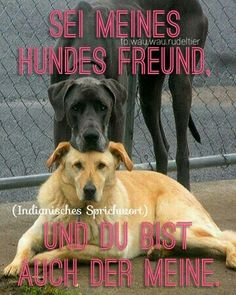 Sei meines Hundes Freund, und du bist auch der meine. (Indianisches Sprichwort)  FB.wau.wau.rudeltier