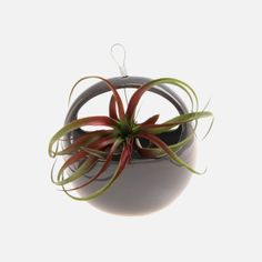 Hanging Aerium Nest Planter- Charcoal by Chive Dried Flower Arrangements, Flower Vases, Flower Pots, Tall Floor Vases, Hanging Vases, Glazes For Pottery, Home Additions, Dot And Bo, Mold And Mildew