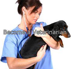 Should i become a Veterinarian?