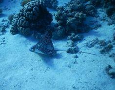 Snorkeling in Sharm El Sheikh - El Faraana Bay- Temple reef