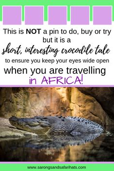 A bridge is one place that you would not expect to find a crocodile. This is Africa - keep your eyes open or you could miss something amazing. Travel Articles, Travel Tips, Nile Crocodile, Country Maps, Quick Reads, Prehistoric Creatures, Wildlife Conservation, African Animals, Ultimate Travel