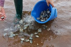 P.E.I.'s Famous Shellfish: Digging for Dinner in Central Bedeque - Prince Edward Island, Canada | Flickr - Photo Sharing!