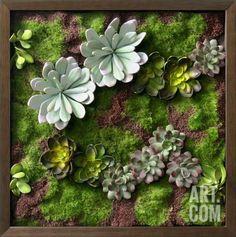 Faux Succulents II Dimensional Product at Art.com