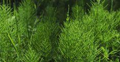 Plísní na rostlinách se zbavíte jednoduše postřikem vychladlým odvarem z přesličky Sandy Soil, In The Hole, Plant Needs, Potting Soil, Propagation, Amazing Gardens, Garden Plants, Evergreen, Perennials