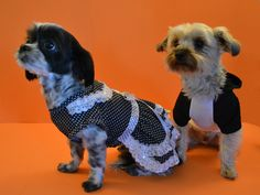 Eli & Khaleesi at a photoshoot together looking cute in Fetch Dog Fashions clothing!  www.fetchdogfashions.com #puppy #dog #dogclothing #dogfashion #dogapparel #dogboutique #dogcouture #shihtzu #yorkie