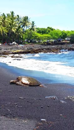 Black sand beaches in Hawaii? YES see them on the Big Island! Plus BEST ways to make them a part of your short time on the island! Hawaii Vacation, Hawaii Travel, Beach Trip, Beach Travel, Vacation Ideas, Tropical Vacations, Beach Vacations, Oahu Hawaii, Spain Travel