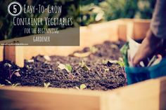 No room for a garden? Here are 5 super easy vegetables you can grow in small spaces using containers!