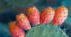 Η υψηλή διατροφική αξία των φραγκόσυκων: http://biologikaorganikaproionta.com/health/242593/