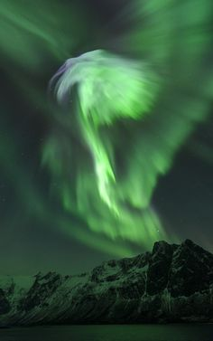 Aurora Phoenix Photo and caption by Bjørn Jørgensen An outburst of Northern Lights (Aurora Borealis) taken during a powerful solar storm in January 2012. The shape of the auroras resembles a bird spreading its wings. Photo Location In the fjord Grøtfjorden close to the city Tromsø in northern Norway.