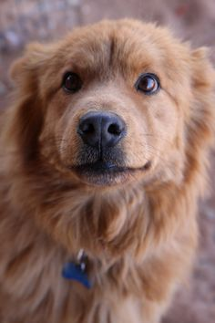 If you can't adopt, sponsor.  This is Cinnamon Bear, my sponsored pet at Best Friends.