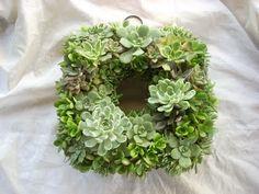 Succulent wreath!