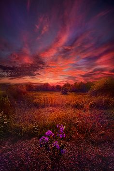 "https://flic.kr/p/pRgnyL | We Find Our Own Story | Wisconsin Horizons by Phil Koch. Lives in Milwaukee, Wisconsin, USA. <a href=""http://phil-koch.artistwebsites.com"" rel=""nofollow"">phil-koch.artistwebsites.com</a> <a href=""https://www.facebook.com/MyHorizons"" rel=""nofollow"">www.facebook.com/MyHorizons</a>"