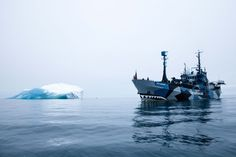 sea shepherd - Google Search