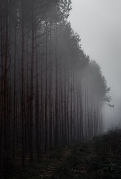 Foggy Forest Line White Photography, Landscape Photography, Nature Photography, Photography Courses, Photography Articles, Cake Photography, Newborn Photography, Wedding Photography, Arte Obscura