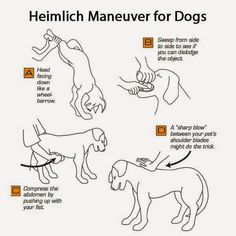 How to do the Heimlich on your chocking dog.