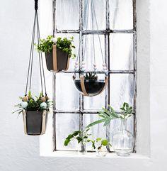 trädgård,uterum,växthus,ampel