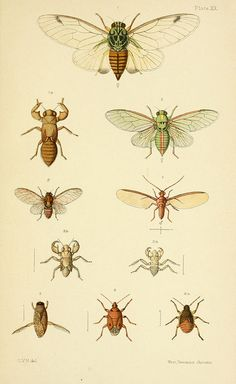 An elementary manual of New Zealand entomology;. London,West, Newman & Co.,1892..