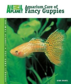 Aquarium Care of Fancy Guppies (Animal Planet Pet Care Library), http://www.amazon.com/dp/B00BBXPN84/ref=cm_sw_r_pi_awdl_Sff7ub18J04PR