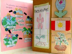 Lapbook : ciclo de las plantas