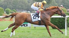 Wise Dan works at Saratoga for the Fourstardave Handicap.