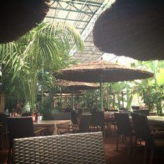 restaurante dentro del árbol de plátano...