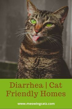 Cat Diarrhea Is A Normal Stage That Every Cat Owner Has To Go Through Sometimes The Reasons Are Obvious And The Remedy Is Easy In 2020 Cat Diarrhea Cats Cat Diseases
