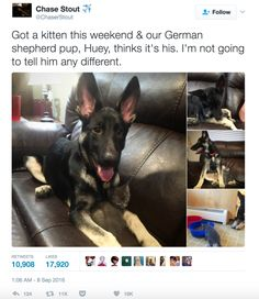 100 Hilarious Tweets About Dogs That'll Definitely Make You Laugh