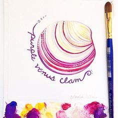 My shell painting today depicts the Purple Venus Clam.  Copyright Amalia Hillmann