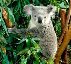 New Zealand - Australia study abroad program.