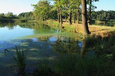 jižní čechy rybníky
