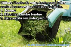 l'herbe tondue lutte contre les mauvaises herbes Diy Jardin, Permaculture, Garden Plants, Gardening Tips, Home And Garden, How To Plan, Outdoor Decor, Amelie, Ainsi