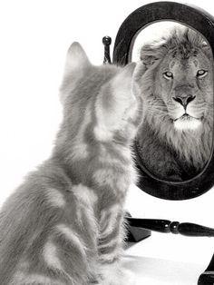 """""""Porsi un obiettivo è la più forte forza umana di auto motivazione.""""  (Paul J. Meyer)"""