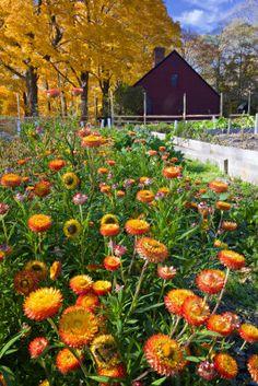 Autumn Flowers   George Oze