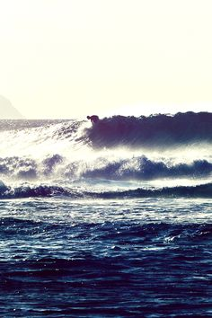 (3) surfing | Tumblr