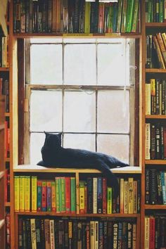 Bookshelves, black cat, window...what more does one need???