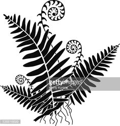 vector fern with new growth curls in black and white royalty-free vector fern with new growth curls in black and white stock vector art & more images of fern Black And White Tree, Black And White Drawing, Pixel Tattoo, Fern Images, Maori Patterns, Fern Tattoo, Black Royalty, Laser Art, Rock Painting Ideas Easy