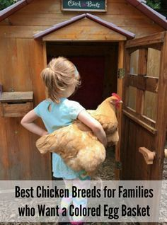 The best chickens breeds for families wanting a colored egg basket. Photo credit: Sara B. from ChickinBoots