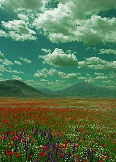 Flowers Sky and Mountains Beautiful