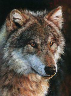 Lobo gris oscuro