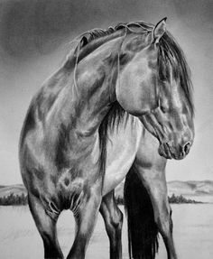The Spanish Mustang - Maria D'Angelo Fine Art In Graphite On Bristol