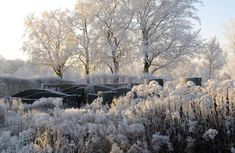 Hummelo in winter   Piet Oudolf