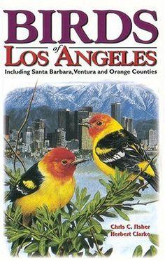 Birds of Los Angeles (U.S. City Bird Guides) by Chris Fisher, http://www.amazon.com/dp/1551051044/ref=cm_sw_r_pi_dp_0yyKsb14X4C6J