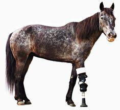 Animal Prosthetics Help Human Amputees Move Again