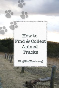 Ideas and directions for keeping adventurous students engaged with tracks and signs of animals in the wild. Learn where to find tracks and how to cast them! Raccoon Paws, Middle School Boys, Animal Tracks, Middle Schoolers, Perfect Boy, Nature Study, Science Books, Farm Yard, Field Guide
