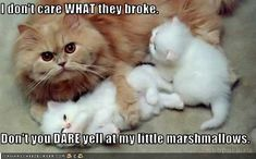 I don't care WHAT they broke. Don't you DARE yell at my little marshmallows. - Cheezburger