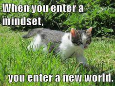 Growth Mindset Memes: Collection: Carol Dweck